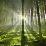 Op 100 meter loopafstand van bos